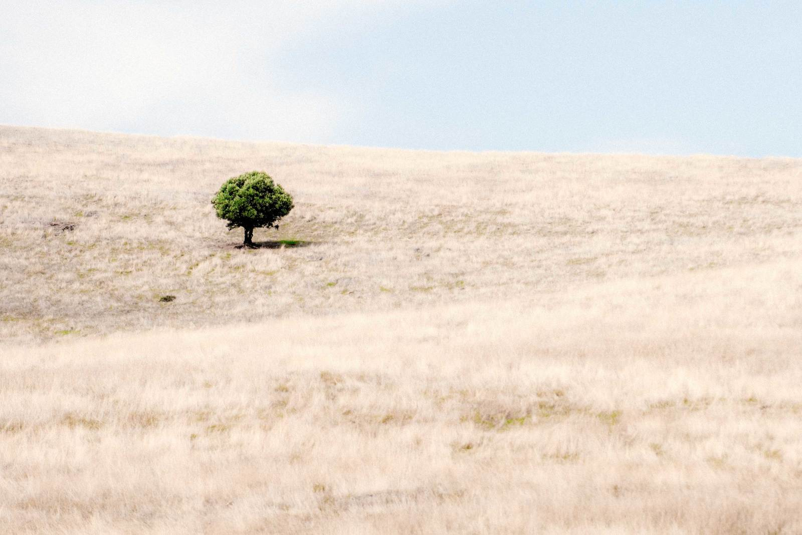 minimalist photography a lone tree